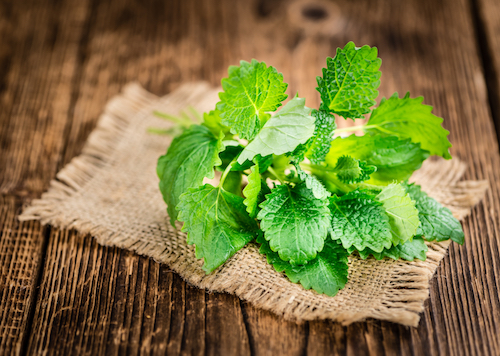 - Best Herbs to Grow Indoors Lemon Balm -